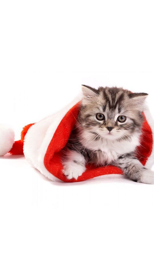 #Cute Cats