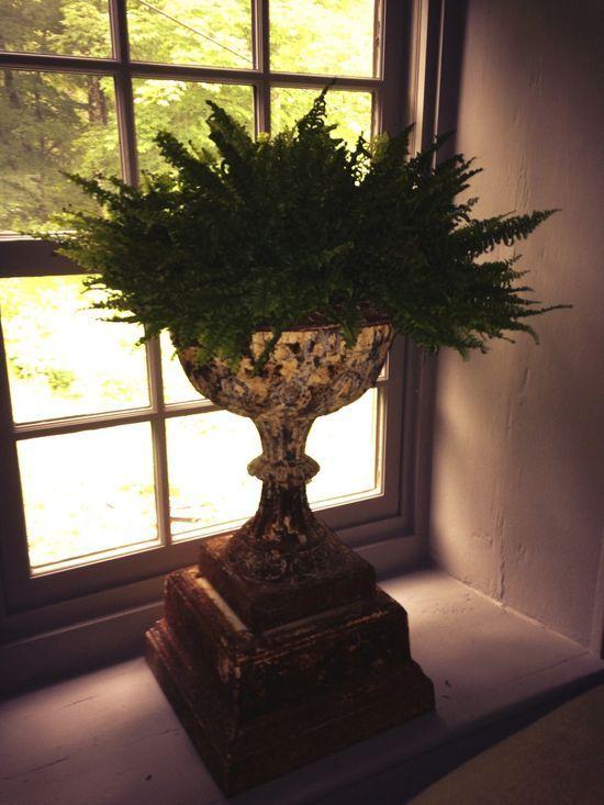 Urn weakness. #gardening #interiors