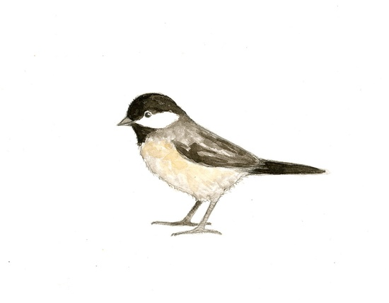 Chickadee Watercolor
