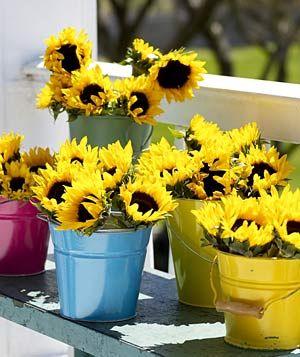 Sun Flowers!