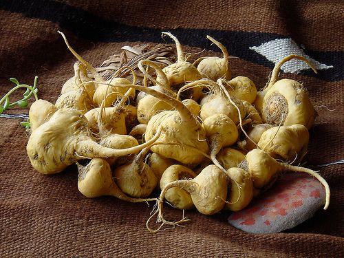 10 Benefits of Maca You Want - The Incan Super food
