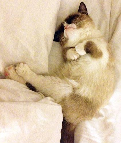 Even sleeping Grumpy Cat still looks grumpy, but also so sweet.
