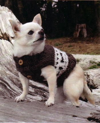 How to Design Patterns for Dog Clothing | eHow UK