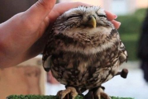 Aww! So apparently owls love to be pet... Looks like this one is really enjoying it! :)