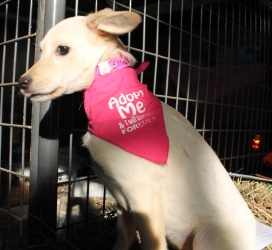 Elina is an adoptable Shepherd Dog in Knapp, WI. I am looking for someone to love me. My name is Elina and I am already spayed and have had my shots. If you would like to give me a good home I would... #adopt #dog #Wisconsin