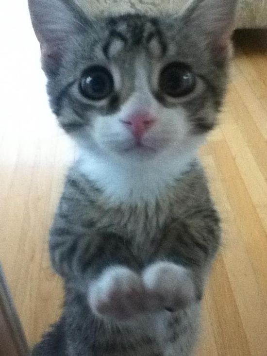 Big-eyed kitty cat