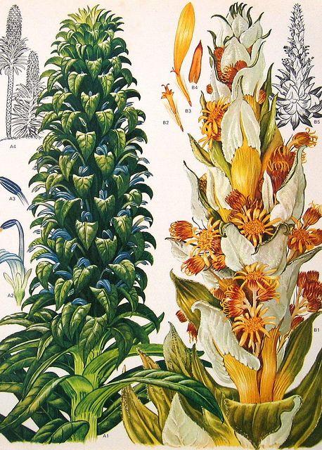 .I love botanicals.