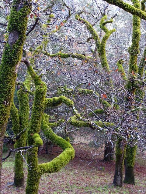 Crazy Moss Trees