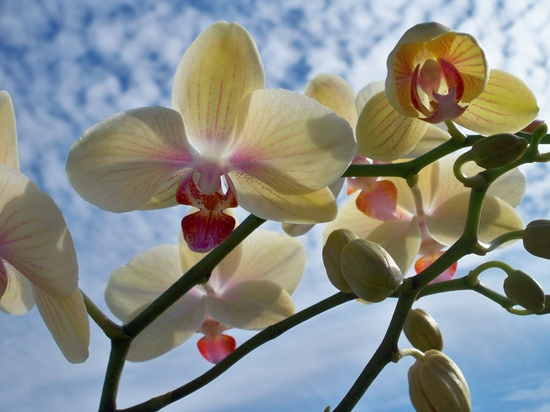 One of my favorite flowers, Orchids