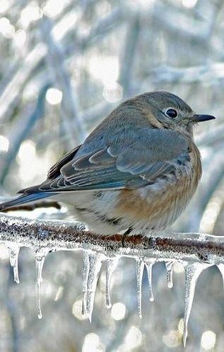 Sweet little winter birdie