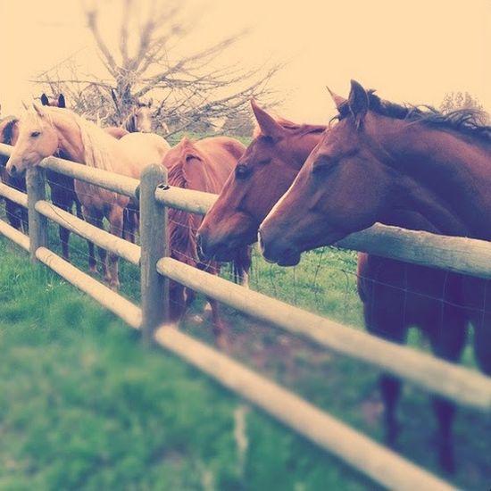 pony up, #cute, #animals
