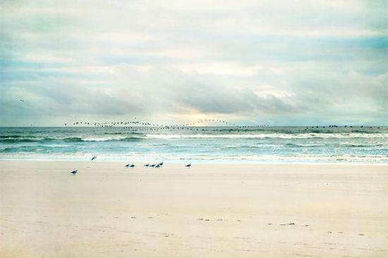 the beautiful #beach of Longbeach #Washington #ocean #seagulls  Displate- a print on metal