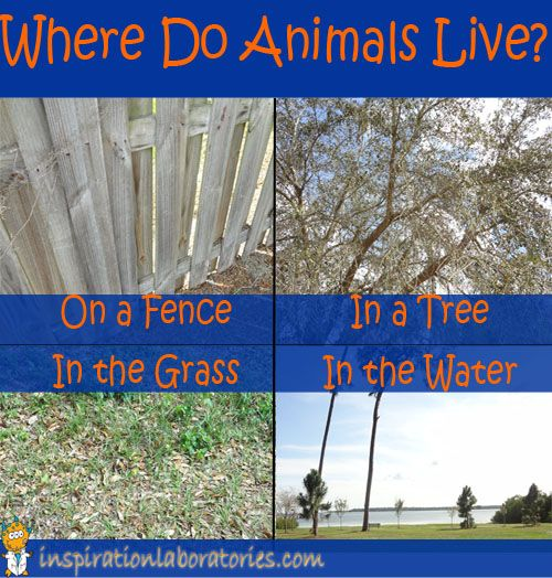 Learn about animal homes - search for them outside, read about them, and do some activities and crafts!
