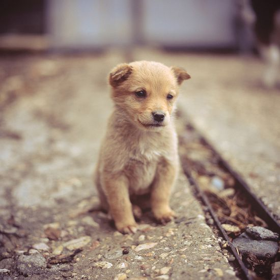 little scrapper