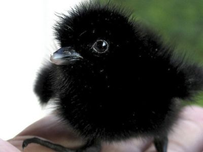 Awwww, sweet little baby crow ???