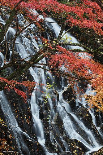 Sohmen Falls?#japan #fukushima