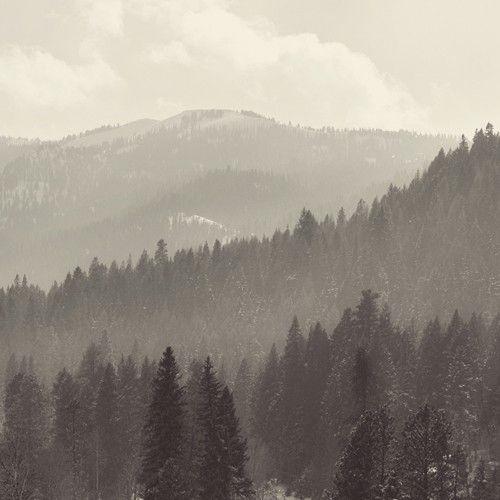 Idaho forest.