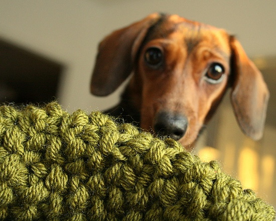 Knitting and a dachshund.