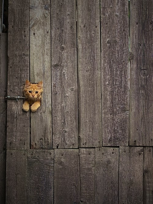 .cute little kitty