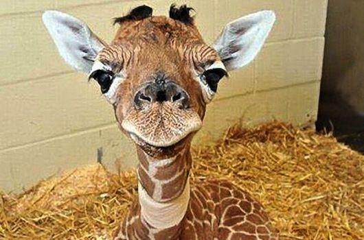 9 Cute Baby Animals