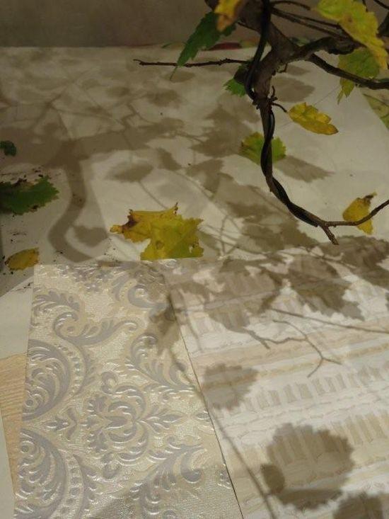 Shadows from my bonsai