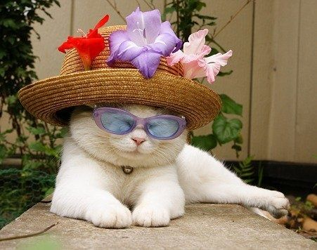 Cat in a hat?!