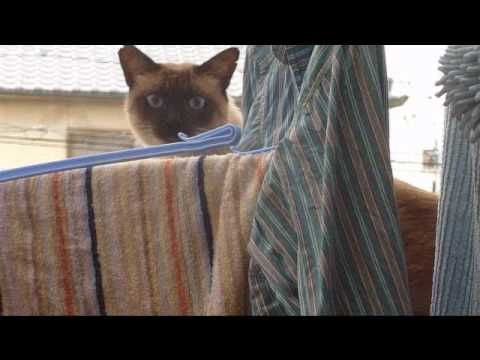 A Cat fails to diving(?> ?? <?)    #neko #cat (YouTube)