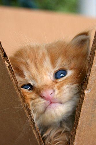 Look at those eyes!