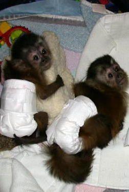 Cute Pet Monkeys