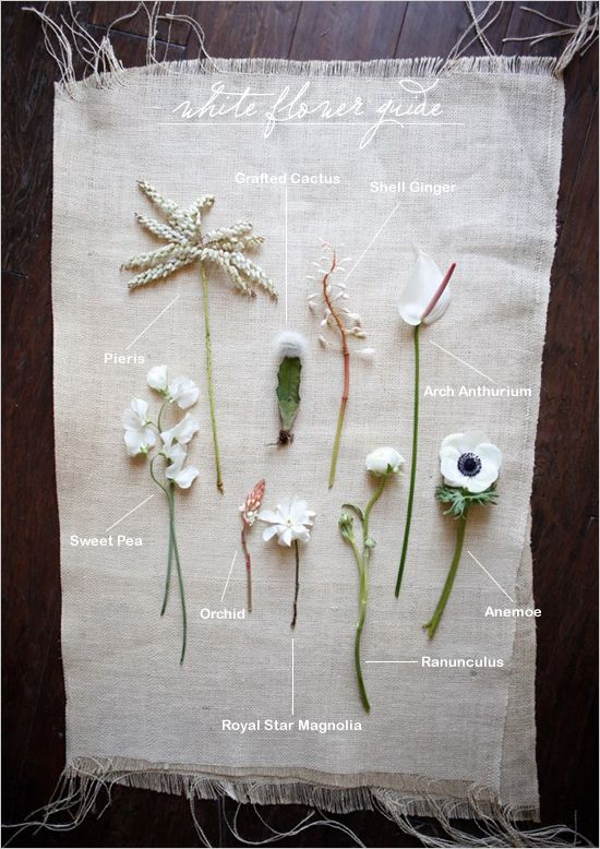 White flower guide #white #flowers