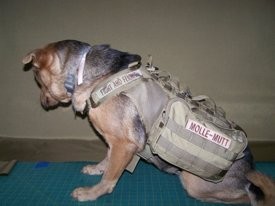 TACTICAL ANIMAL! Fight and Flight Tactical's M/L Proioxis Dog Harness $110