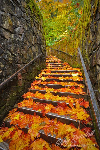 Autumn leaves on the stone steps