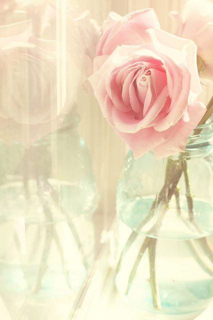 Pink rose in jar