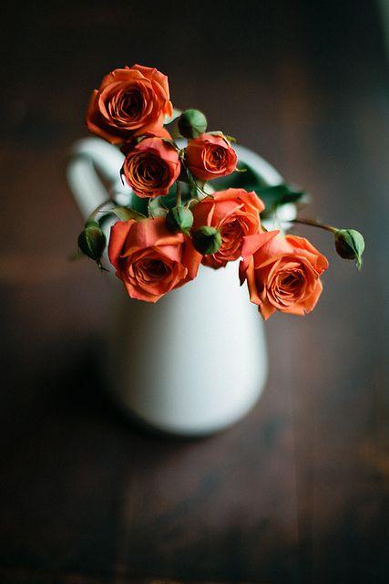 rose ?
