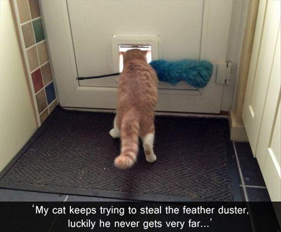 cats never get far
