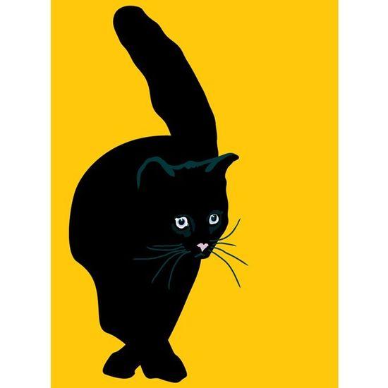 Black Cat: black cat