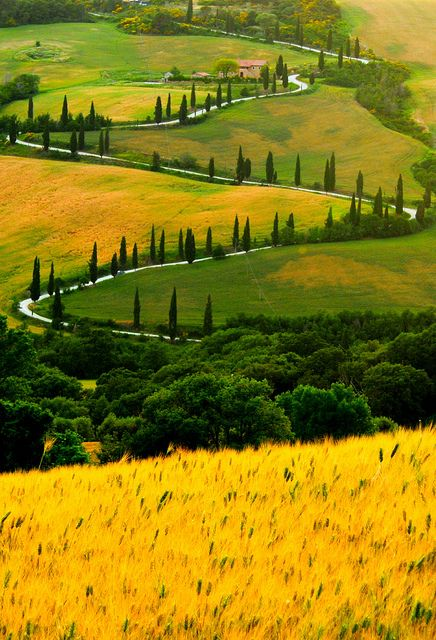 A cypress-lined road zig-zagging up a hill in Ttuscany, Italy