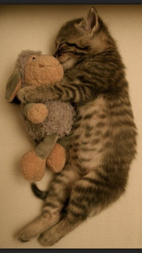 baby cat sleeping with toy ^^