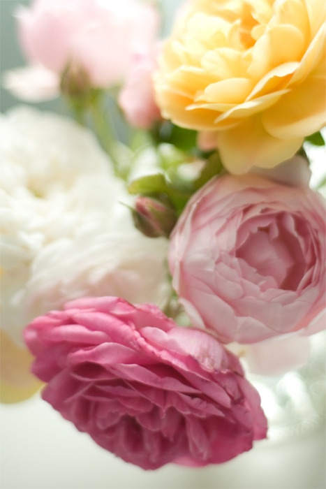 Shades of pink, yellow and white roses