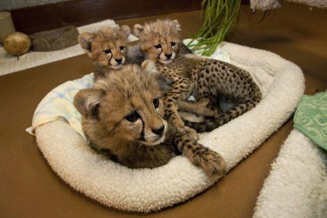 newborn baby animals
