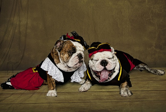 All dressed up and no where to bull :D #costume #clothing #Halloween #cute #dogs #puppies #bulldog #English #pets #animals #sleeping
