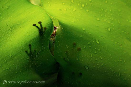 Green, Green, Green....