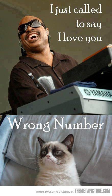 Stevie calls Grumpy Cat…