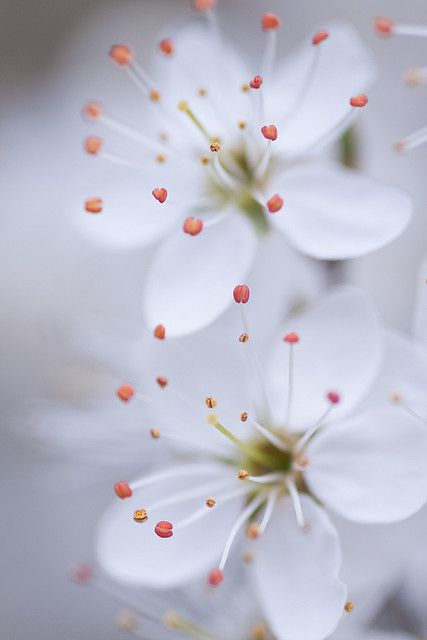"""Dreamy Blossom"" ©Zoe Power"