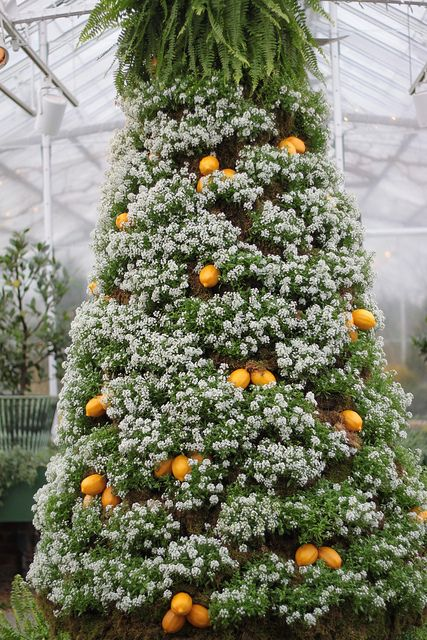 Alyssum and Orange Christmas Tree by TaniaGail