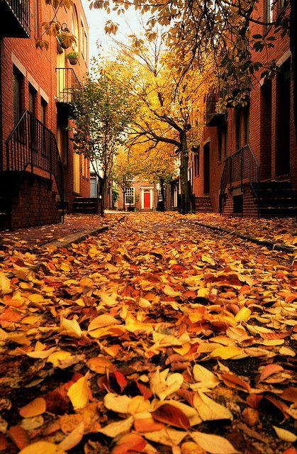 ~``Philadelphia in the fall.