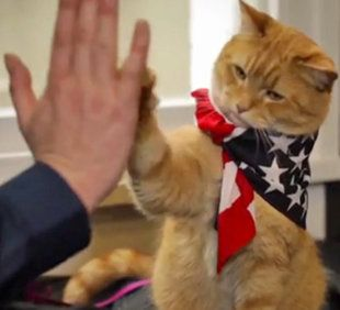 Bob the cat helped his drug addicted owner James turn his life around. High five! #pets #animals #cats