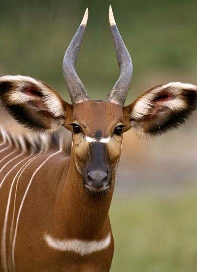 Amazing buk