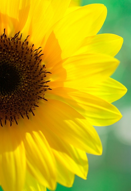 I so do love sunflowers!!!