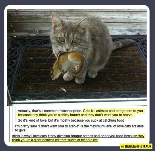 This is why I love cats…